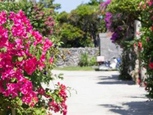 石垣島からフェリーで行ける竹富島